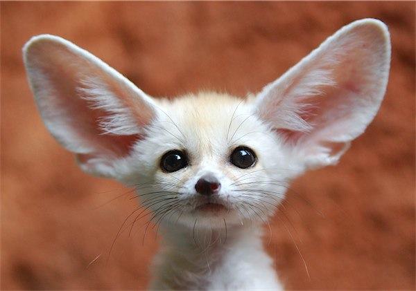 """「私の全部が耳?」""""I'm all ears""""っていったい何?"""