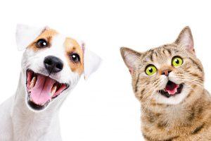 【知り得英語学習!】知ってた?動物の鳴き声は言語で異なる!