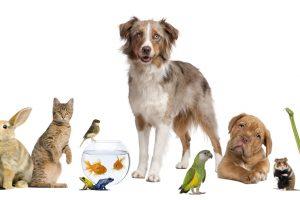 【英語豆知識】動物を例えた英語表現ーNames for Groups of Animals and Yes, these are Real!