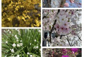 【ネイティブ英語ブログを読んで使える英語フレーズを覚えよう!】Spring Colors