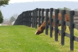 The grass is always greener on the other side 【3分で英会話!】日常会話で使える英語のことわざ、慣用句 その1of the fence.