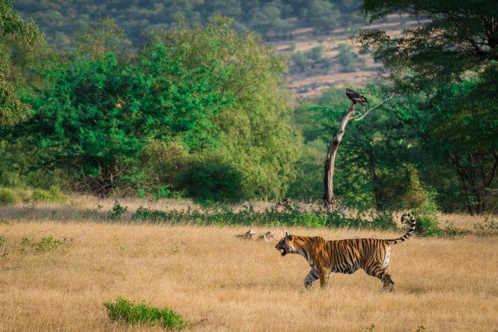 【海外を知るーインド】Indian parks!ーネイティブ講師Priya先生の英語記事を読もう!