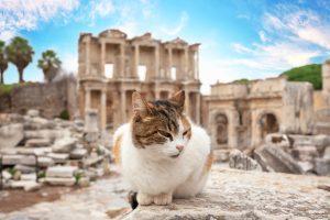 英作文の講座の講師RINA先生、添削のお仕事も夏休みをいただいてトルコ旅行へ。